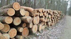 """Wycinka w Lesie Kabackim. """"Las to nie park, nie liczy się drzew na sztuki"""""""