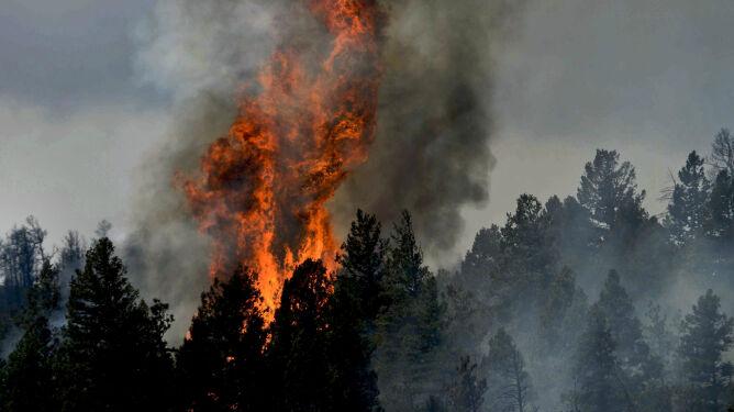 """""""Teraz susze będą coraz częstszym zjawiskiem"""". Zmiany klimatu a pożary"""