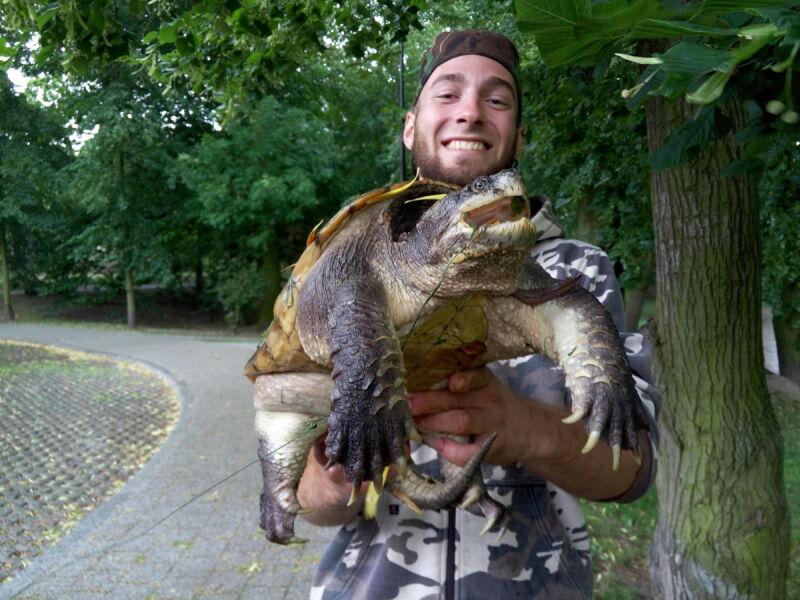 Żółw jaszczurowaty schwytany w Kutnie