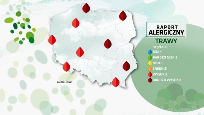 Raport alergiczny. Alergikom we znaki dadzą się pyłki traw