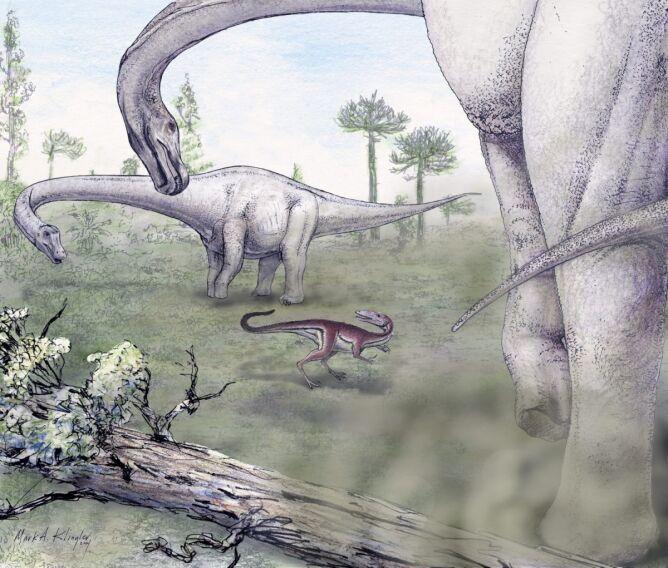 Dreadnoughtus Schrani i mięsożerny dinozaur