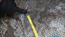 Wylinka węża nad Wisłą (Animal Rescue Polska/Służba Ochrony i Ratownictwa Zwierząt)